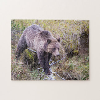 USA, Wyoming, Yellowstone National Park, Grizzly 1 Jigsaw Puzzle