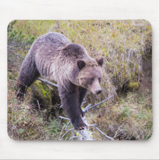 USA, Wyoming, Yellowstone National Park, Grizzly 1 Mouse Mat