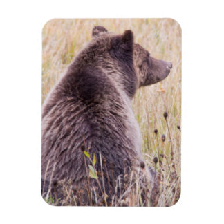 USA, Wyoming, Yellowstone National Park, Grizzly 2 Rectangular Photo Magnet