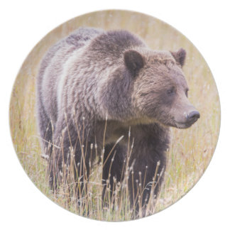 USA, Wyoming, Yellowstone National Park, Grizzly 3 Plate