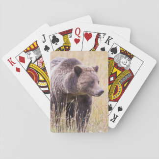 USA, Wyoming, Yellowstone National Park, Grizzly 3 Playing Cards