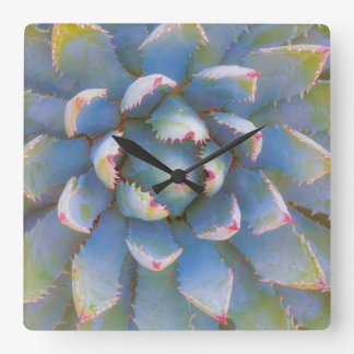 Utah, Dixie National Forest. Close-up of yucca Wall Clock