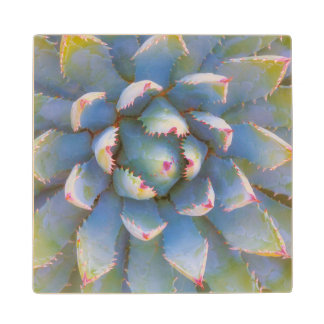 Utah, Dixie National Forest. Close-up of yucca Wood Coaster
