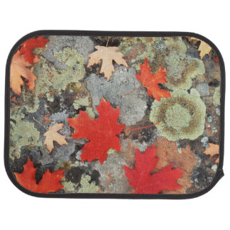 Utah, Fishlake National Forest. Patterns Car Mat