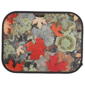 Utah, Fishlake National Forest. Patterns Floor Mat