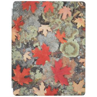 Utah, Fishlake National Forest. Patterns iPad Cover