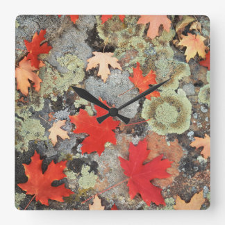 Utah, Fishlake National Forest. Patterns Wall Clocks
