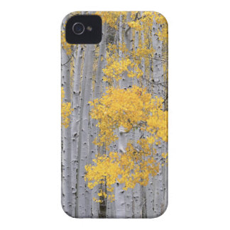 UTAH. USA. Aspen grove (Populus tremuloides) in iPhone 4 Case