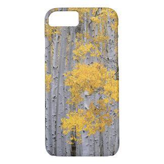 UTAH. USA. Aspen grove (Populus tremuloides) in iPhone 8/7 Case
