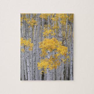 UTAH. USA. Aspen grove (Populus tremuloides) in Jigsaw Puzzle