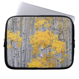 UTAH. USA. Aspen grove (Populus tremuloides) in Laptop Sleeve