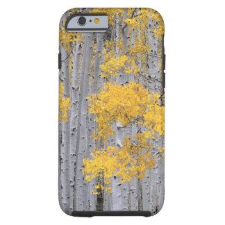 UTAH. USA. Aspen grove (Populus tremuloides) in Tough iPhone 6 Case