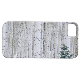 UTAH. USA. Aspen (Populus tremuloides) & Douglas Barely There iPhone 5 Case