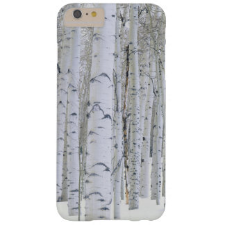 UTAH. USA. Aspen (Populus tremuloides) & Douglas Barely There iPhone 6 Plus Case