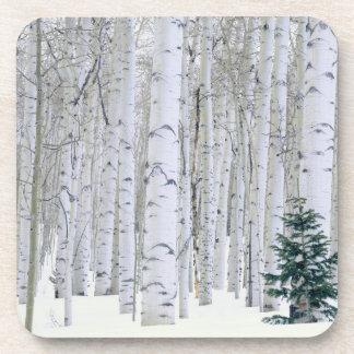 UTAH. USA. Aspen (Populus tremuloides) & Douglas Coaster