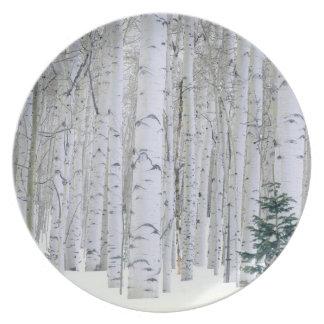 UTAH. USA. Aspen (Populus tremuloides) & Douglas Dinner Plate