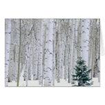 UTAH. USA. Aspen (Populus tremuloides) & Douglas Greeting Card