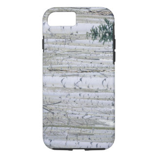 UTAH. USA. Aspen (Populus tremuloides) & Douglas iPhone 8/7 Case