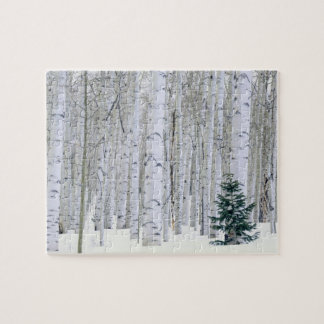 UTAH. USA. Aspen (Populus tremuloides) & Douglas Jigsaw Puzzle