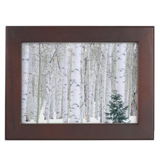 UTAH. USA. Aspen (Populus tremuloides) & Douglas Keepsake Box