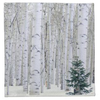 UTAH. USA. Aspen (Populus tremuloides) & Douglas Napkin