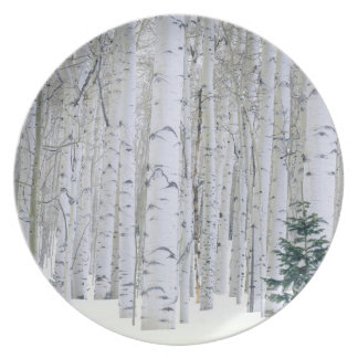UTAH. USA. Aspen (Populus tremuloides) & Douglas Plate