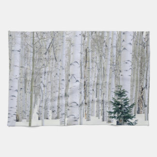 UTAH. USA. Aspen (Populus tremuloides) & Douglas Tea Towels
