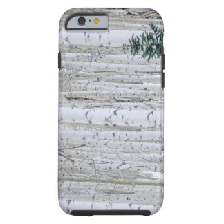 UTAH. USA. Aspen (Populus tremuloides) & Douglas Tough iPhone 6 Case