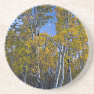 Utah. USA. Aspen Trees And Moon At Dusk Coaster