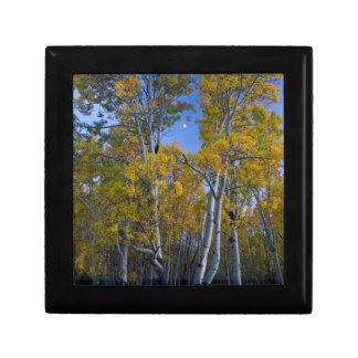 Utah. USA. Aspen Trees And Moon At Dusk Gift Box