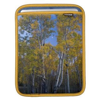 Utah. USA. Aspen Trees And Moon At Dusk iPad Sleeve
