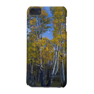 Utah. USA. Aspen Trees And Moon At Dusk iPod Touch (5th Generation) Case