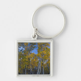 Utah. USA. Aspen Trees And Moon At Dusk Key Ring