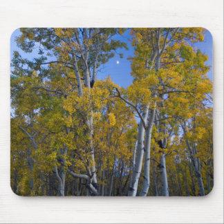 Utah. USA. Aspen Trees And Moon At Dusk Mouse Mat