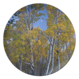 Utah. USA. Aspen Trees And Moon At Dusk Plate