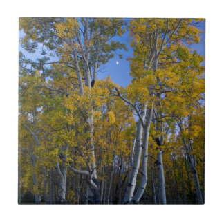 Utah. USA. Aspen Trees And Moon At Dusk Tile