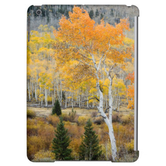 Utah, USA. Aspen Trees And Willow Thickets