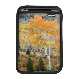 Utah, USA. Aspen Trees And Willow Thickets iPad Mini Sleeve