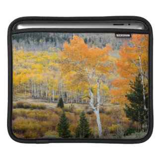 Utah, USA. Aspen Trees And Willow Thickets iPad Sleeve