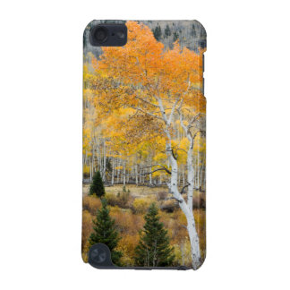 Utah, USA. Aspen Trees And Willow Thickets iPod Touch 5G Cover