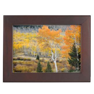 Utah, USA. Aspen Trees And Willow Thickets Keepsake Box