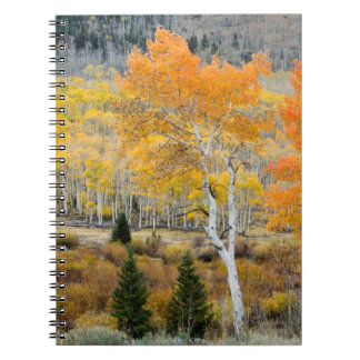 Utah, USA. Aspen Trees And Willow Thickets Notebook