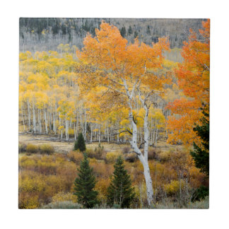 Utah, USA. Aspen Trees And Willow Thickets Tile