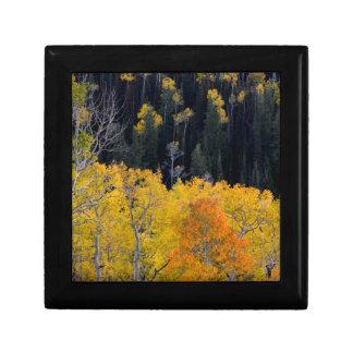 Utah. USA. Aspen Trees In Autumn On The Sevier Gift Box