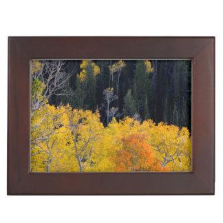 Utah. USA. Aspen Trees In Autumn On The Sevier Keepsake Box