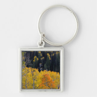 Utah. USA. Aspen Trees In Autumn On The Sevier Key Ring