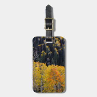 Utah. USA. Aspen Trees In Autumn On The Sevier Luggage Tag