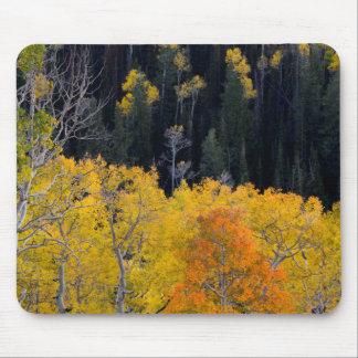 Utah. USA. Aspen Trees In Autumn On The Sevier Mouse Mat