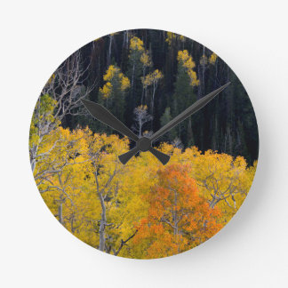 Utah. USA. Aspen Trees In Autumn On The Sevier Round Clock