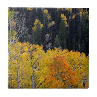 Utah. USA. Aspen Trees In Autumn On The Sevier Tile